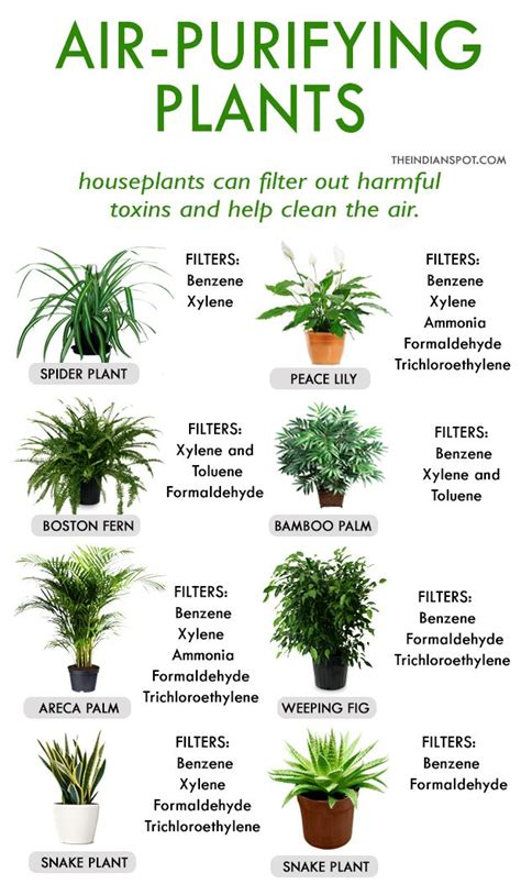 best plants for apartment air quality 25 best plant rooms ideas on pinterest plants indoor