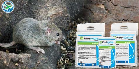 Jual Obat Pembasmi Tikus page 2 jual pestisida insektisida kimia organik