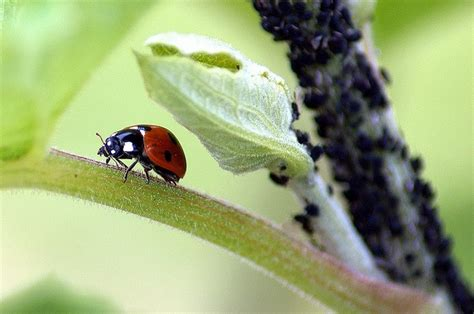 8 Ways To Deal With Pests by Quot With Organic Gardening We Need To Find More Creative