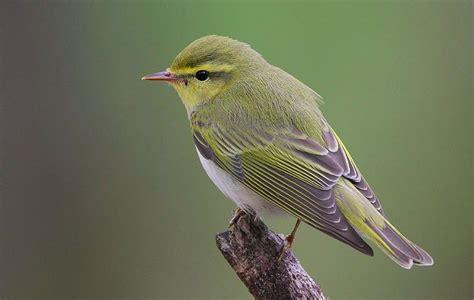 uccello 171 lunedi sostenibili