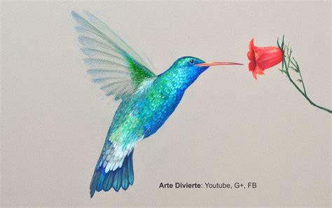 192 Tip Profesional Word c 243 mo dibujar un colibr 237 con l 225 pices de colores arte
