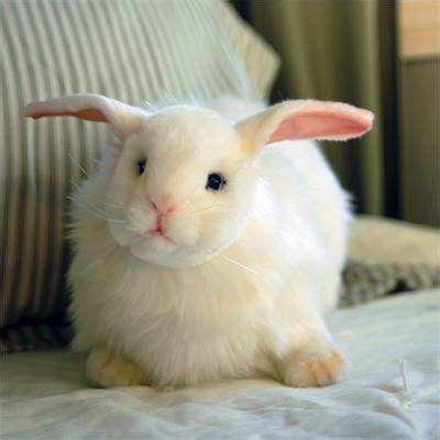 snow white rabbit hansa rabbit hansa stuffed animals