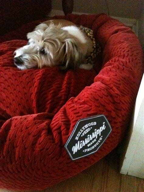 can dogs pomegranate this is mister from oakland he chose the snazzy pomegranate donut bed mississippi