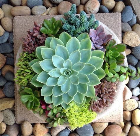 succulents plants 17 best ideas about succulents on pinterest plants