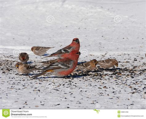 colorful winter birds eating stock photo image 38961258