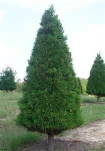 virginia pine coniferous forest