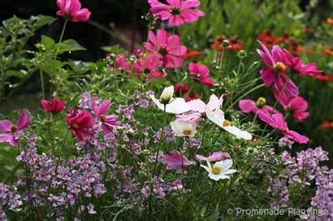 an english country cottage garden promenade plantings