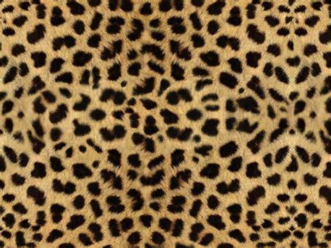 Animal Print by Fabulous Finds Take A Walk On The Side