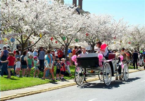 Free Warrant Search Macon Ga International Cherry Blossom Festival