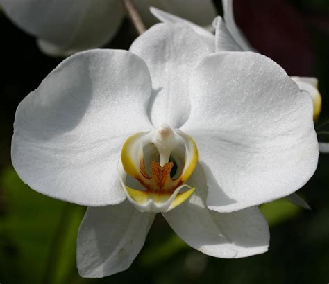 significato dei fiori orchidea significato fiori orchidea significato fiori orchidea