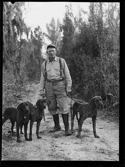 Unidentified man with Plott Hounds on a bear hunt in Lake