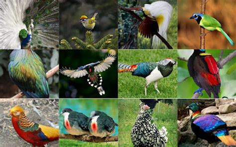 especies de pajaros silvestres pajaros de nuestros cos observaci 243 n de aves planeta vital en conexi 243 n positiva