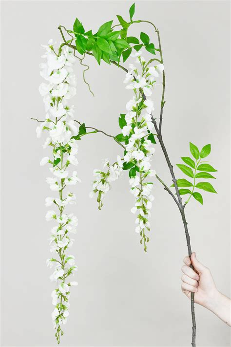 Flower Arranging White Wisteria Flowering Branch 69 Quot