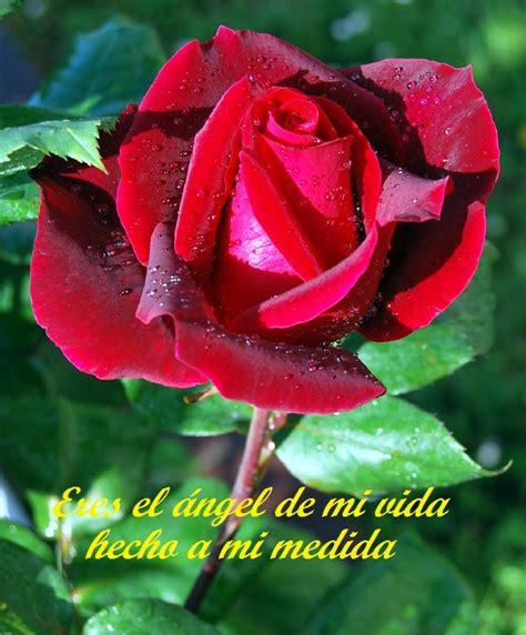 imagenes con rosas y frases bonitas imagenes bonitas de rosas para las madres hermosas