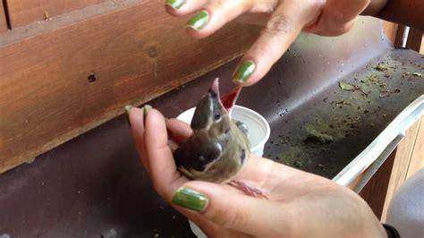 we found a baby bird youtube