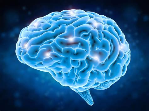 for the brain what happens in the brain during anxiety study sheds light