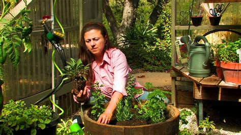 Vegetable Gardening How Do I Start A Culinary Herb How Do I Start A Vegetable Garden