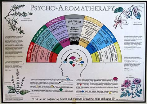 Sale Essential Aroma Therapy best 25 aromatherapy chart ideas on essential
