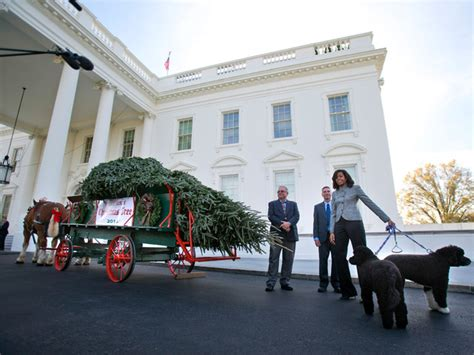 white house holiday tree white house christmas tree arrives from pennsylvania wptv com