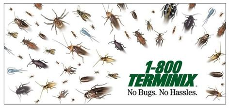 home pest quot scattered bugs quot print ad by ward