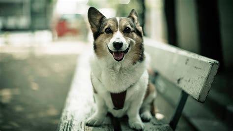 dog backgrounds   pixelstalknet