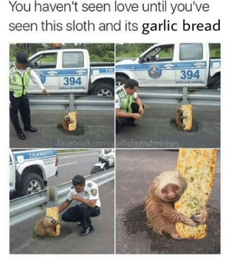 search dirty sloth memes  meme