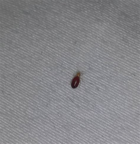 bed bugs philadelphia bed bug 1 picture of wyndham garden philadelphia airport essington tripadvisor