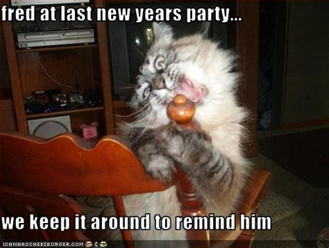 Happy New Year Cat Meme - a few new year lolcats the skinny on my jeans genes