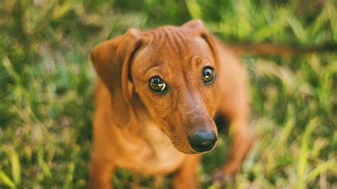 md wallpaper dog   animal papersco