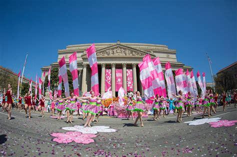 the lights festival dc cherry blossom festival is the best festival in washington dc