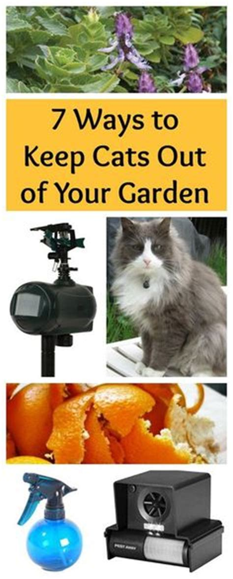 how to keep stray cats out of your yard helpful hints