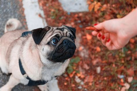 can dogs eat pistachios can dogs eat nuts mnn nature network
