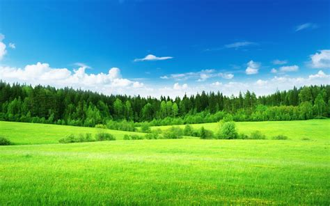nature landscape trees grass green clouds blue sky
