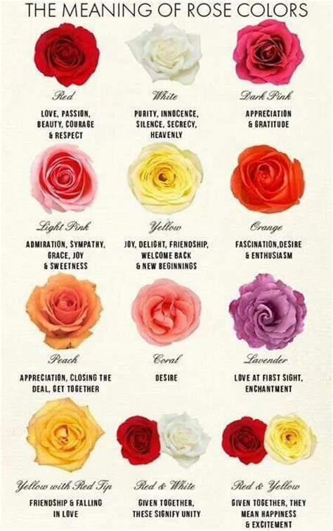 what do different colours mean 17 best ideas about rose color meanings on pinterest