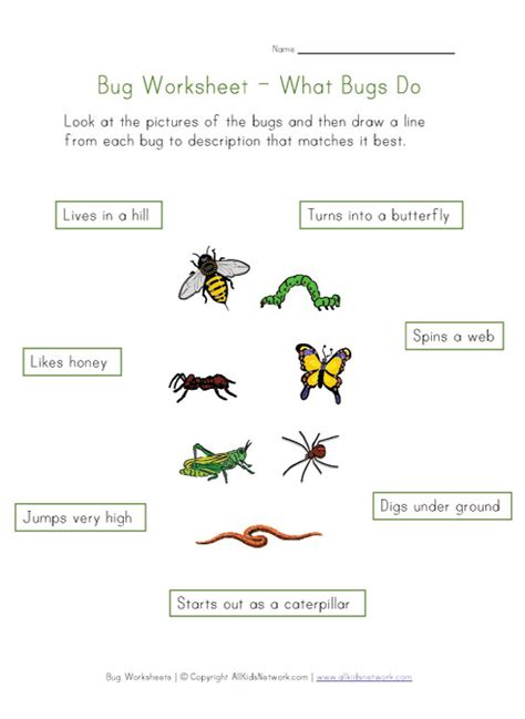 kids bug and insects worksheets learn about bugs worksheet for kids