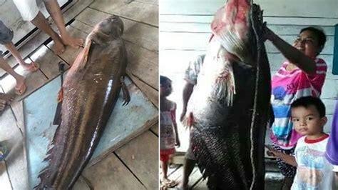 film barat monster ikan ikan monster yang kerap teror warga kalimantan ini