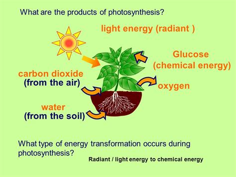 what type of energy is light plants and photosynthesis ppt video online download