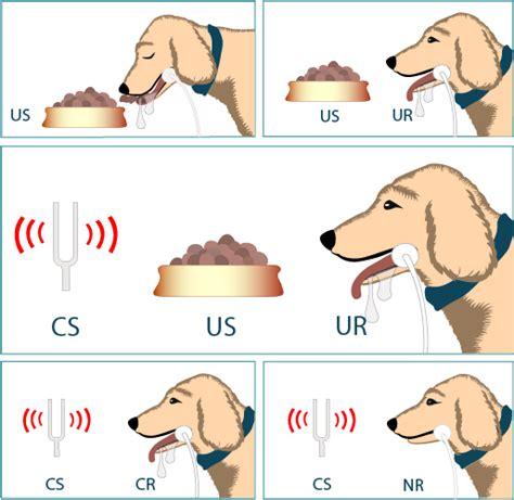 pavlov dogs behaviorism 1 historical progress psych pics