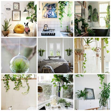 best 25 indoor plant stands ideas on pinterest decorative indoor planters 100 large indoor plants