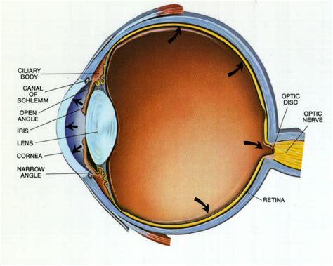 imagenes de ojos por dentro latreia 187 archivo del blog 187 glaucoma
