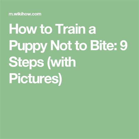 how to teach a not to bite best 25 puppy biting ideas on a puppy puppy care and