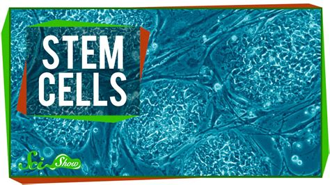 stem cells stem cells youtube