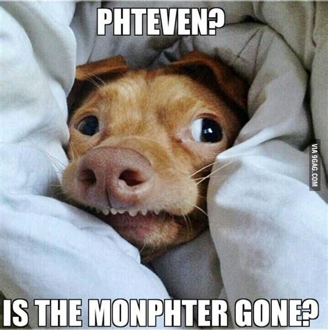 Lisp Meme - 89 best images about lisp meme dog on pinterest 4th