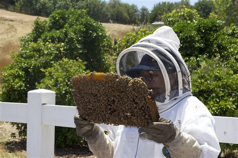 can you have a beehive in your backyard make your own honey with backyard beekeeping greener ideal