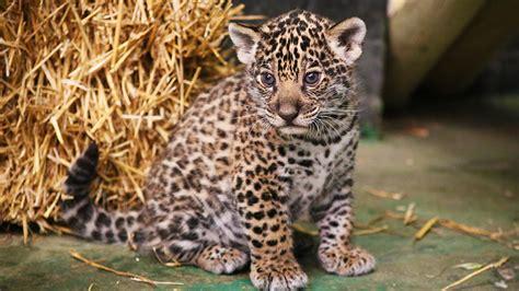 discount voucher paradise wildlife park paradise wildlife park discount voucher vouchers lets