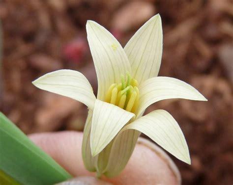 oat fiori di bach oat floridinamica