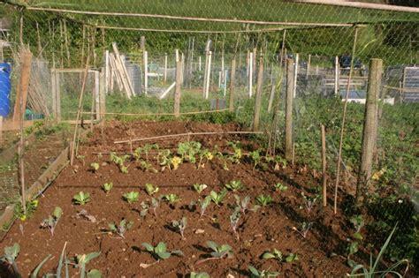 vegetable garden netting frame finding or creating types of garden netting frames that work