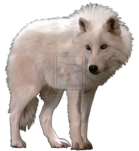 Wolfe Background Check Arctic Wolf Clipart Www Imgkid The Image Kid Has It