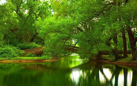 wallpaper green tree hd green trees over bridge in park full hd wallpaper and