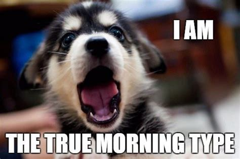 Cute Good Morning Meme - cute funny good morning images and memes with animals